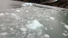 Glacial Ice floating in water